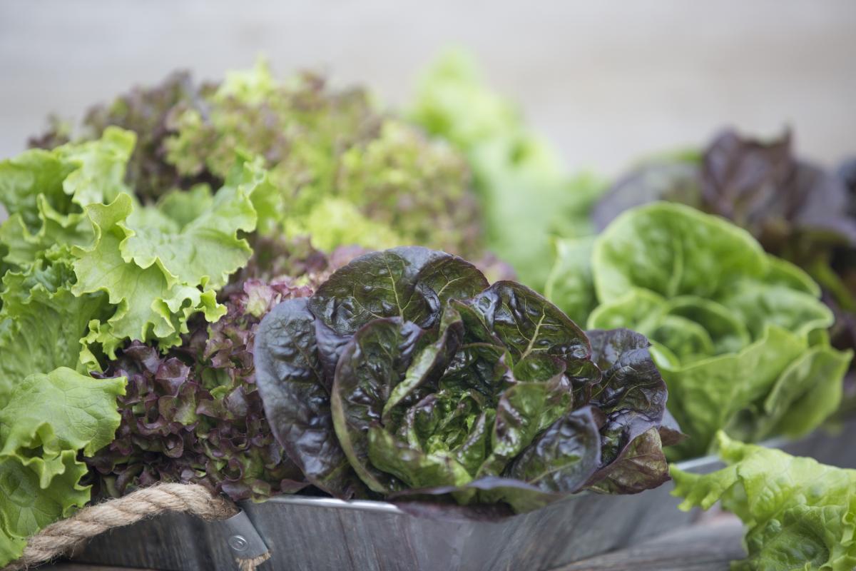 Superior Fresh leafy greens