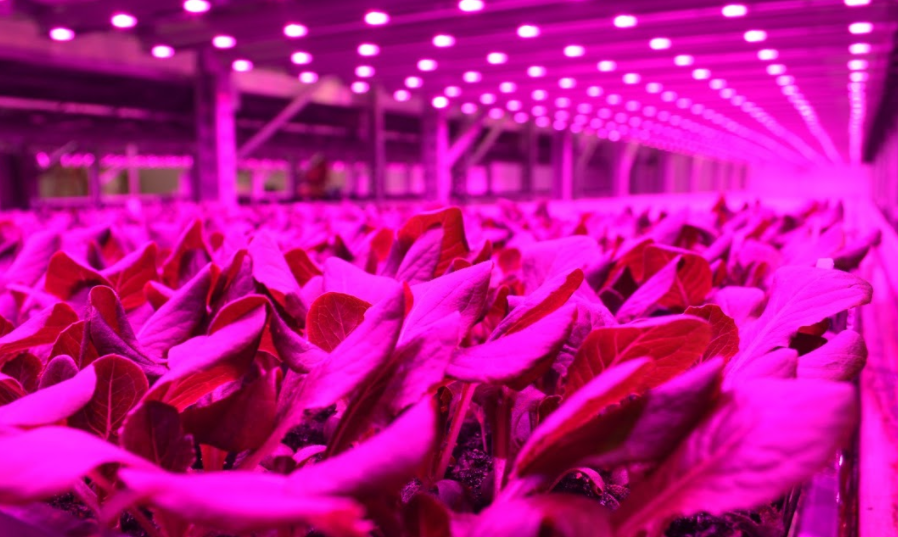 growing facility