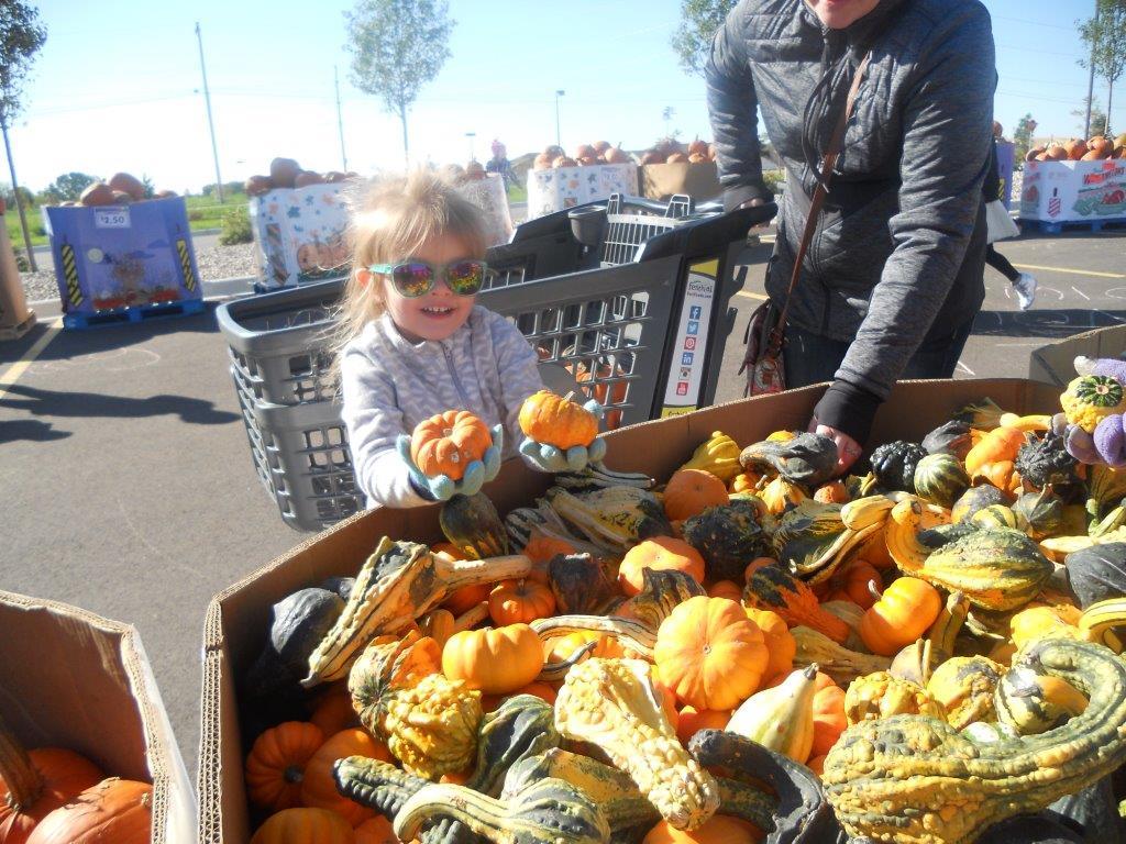 pumpkin blowout pic