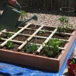 beginner container gardening
