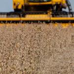 China troca soja brasileira pela americana, dizem fontes