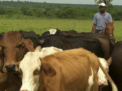 Argentina elevará tributação em exportações de carne bovina, diz Marfrig
