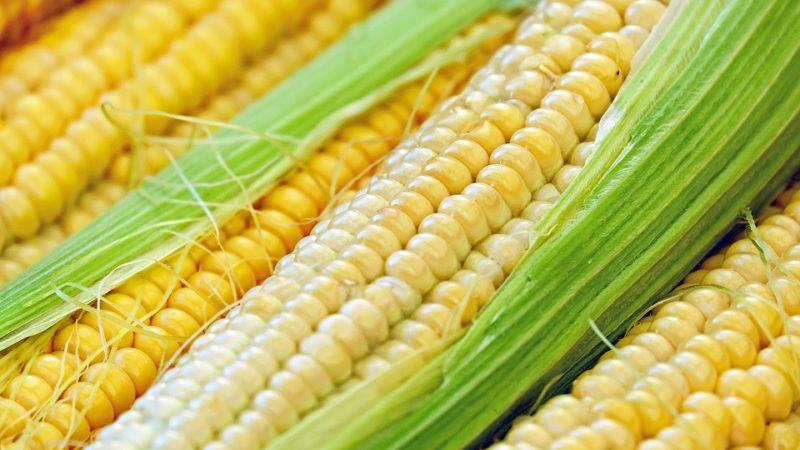México: com conflito comercial com EUA, país importa milho do Brasil