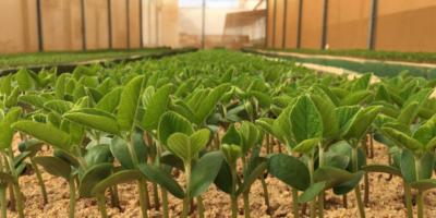 Boa Safra: produtora de sementes pede registro de IPO