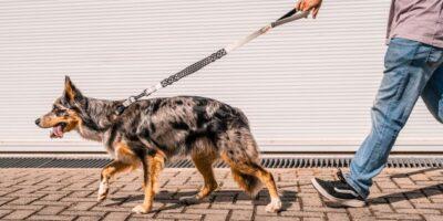 Petlove e DogHero anunciam fusão de operações