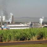 São Martinho (SMTO3) investirá R$ 640 mi para implantar usina de etanol