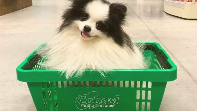Cobasi, concorrente da Petz (PETZ3), prepara IPO e novas aquisições