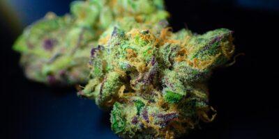 BTG (BPAC11) lança fundo de Cannabis com aporte inicial de R$ 100
