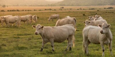 Argentina suspende exportações de carne bovina: Minerva (BEEF3) e Marfrig (MRFG3) caem