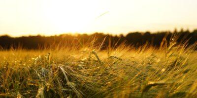 AgriBrasil, de comercialização de grãos, pede registro para IPO