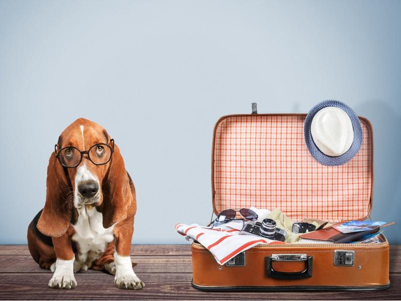 Cestovní pojištění psa