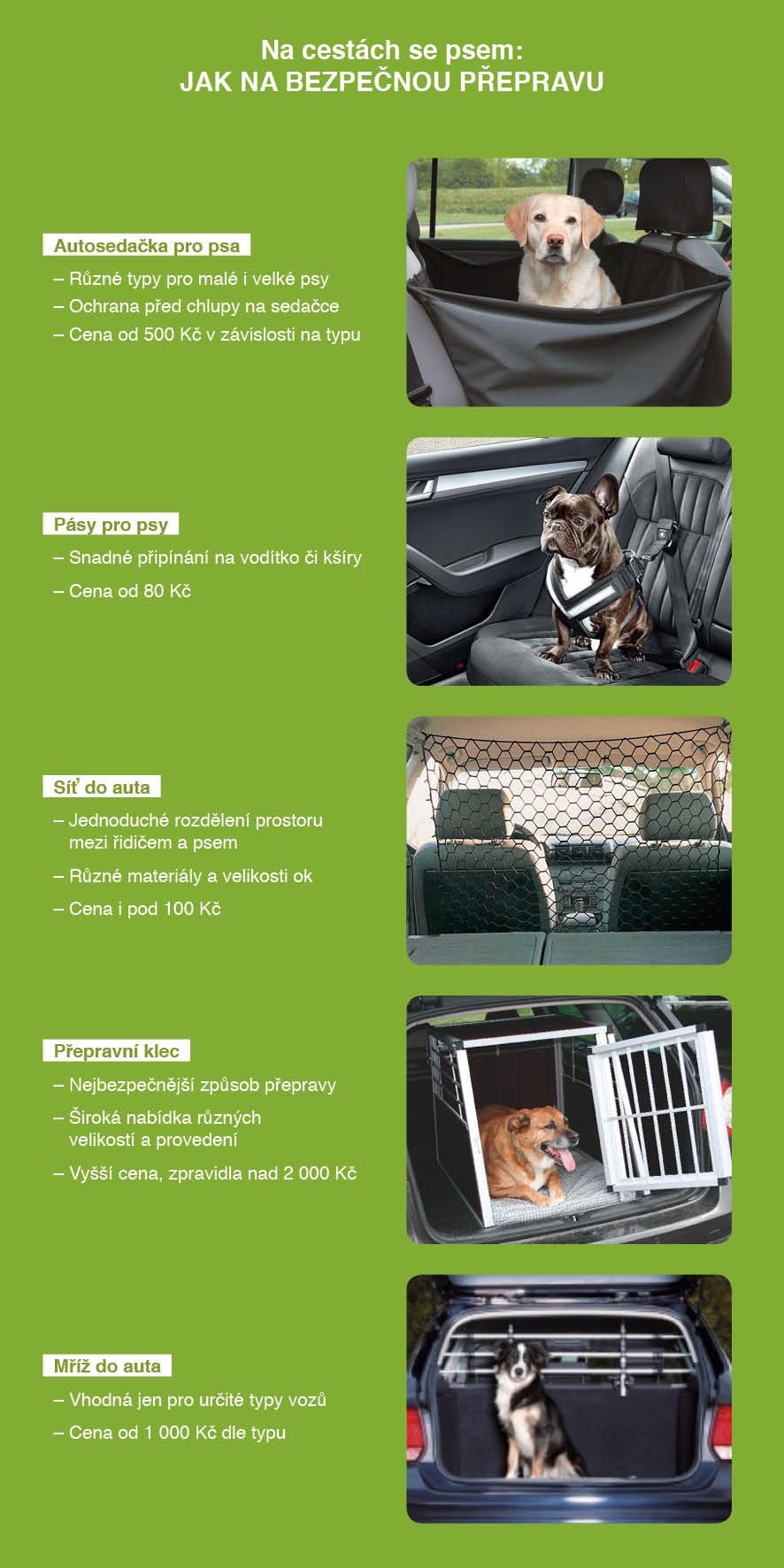 Jak bezpečně převážet psa v autě