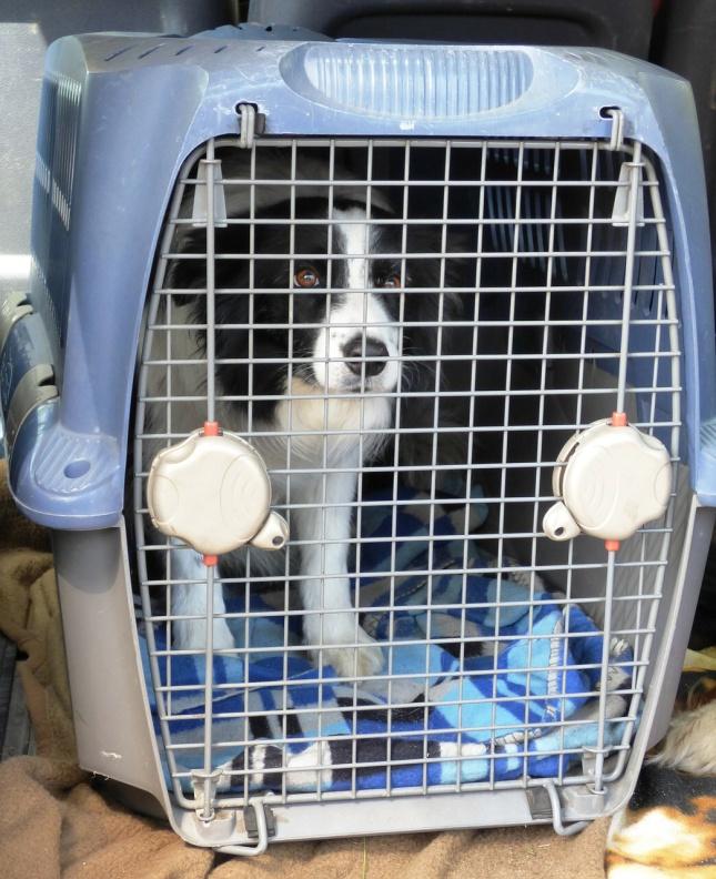 Pes v cestovní přepravce