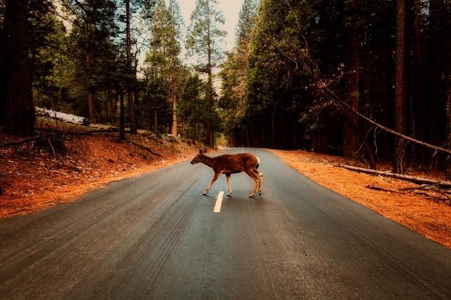 Zvěř na silnici