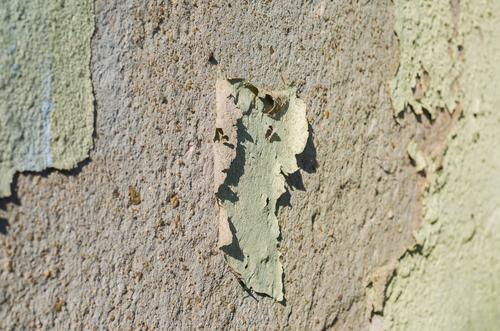 peeling-paint-wet-rot