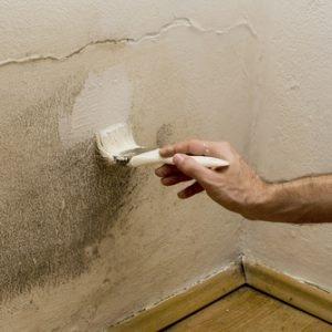 damp-paint
