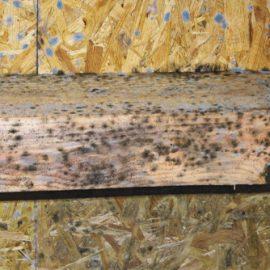timber-damp