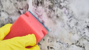 cleaning-mould