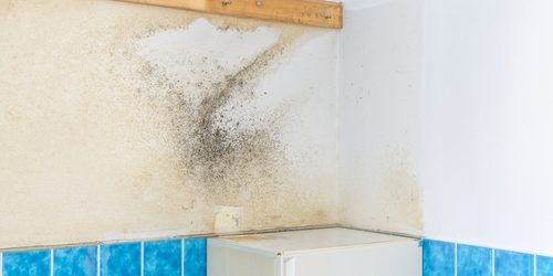 bathroom wall covered with rising damp