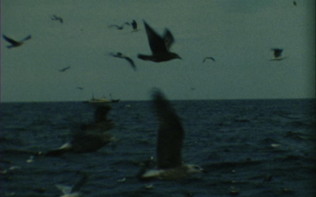 Archivo de Cine de Movilidad