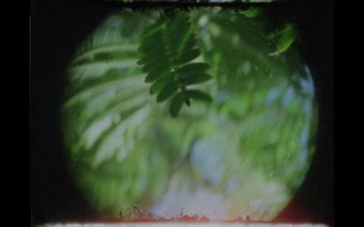 Videoplaylist: Imágenes errantes en el cine experimental mexicano contemporáneo