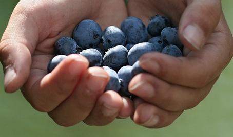 hands fruit