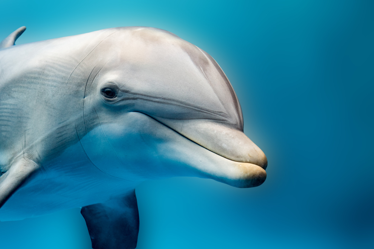 Dolphins Have Names