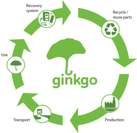 Ginkgo lifecycle