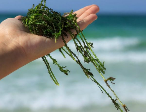 Benefits of Seaweed in Skincare: A Healthy Dose of Greens for Skin