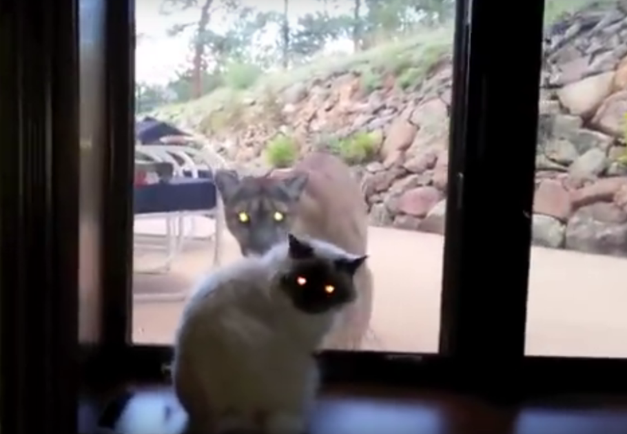 This house cat has some crazy friends.