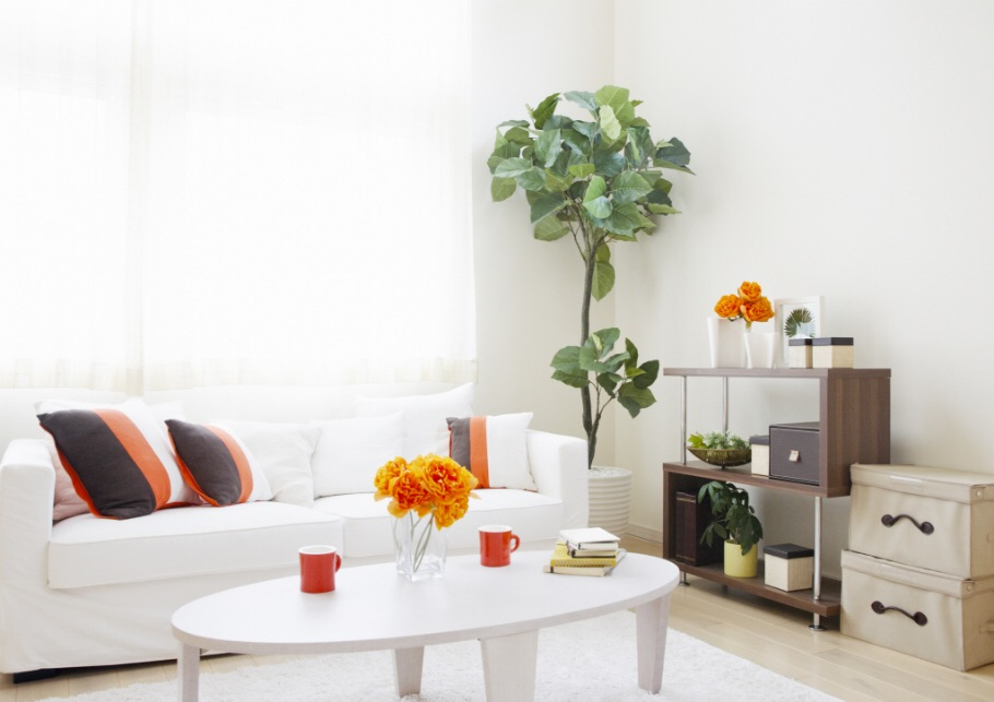 Studio Apartment Ideas: Live Large in a Small Space