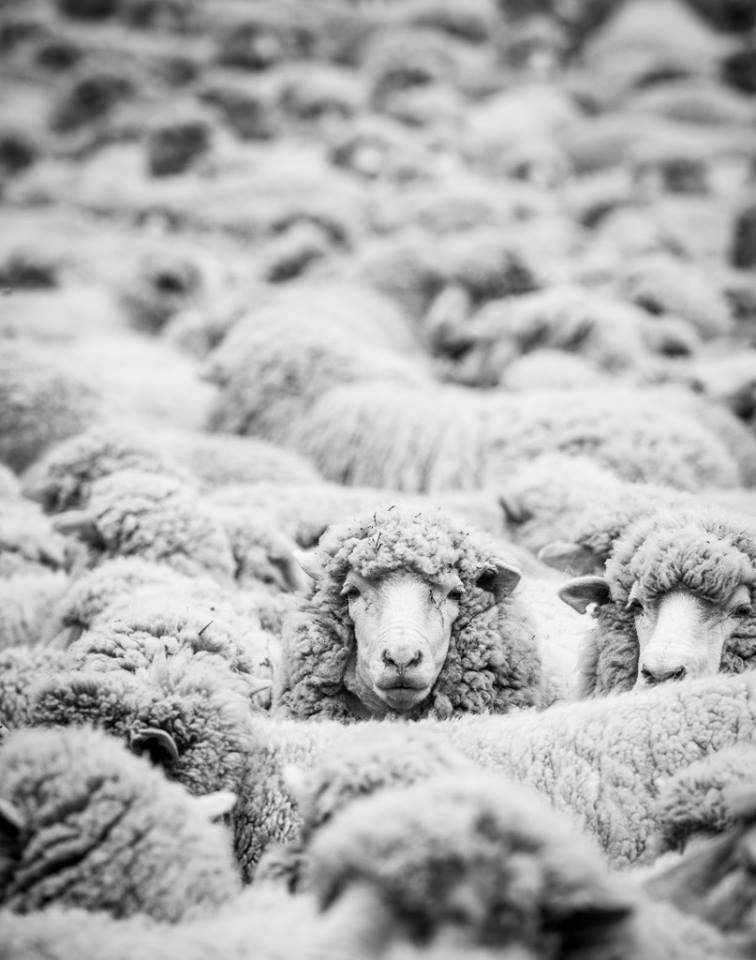 Patagonia dropped its bad wool supplier.