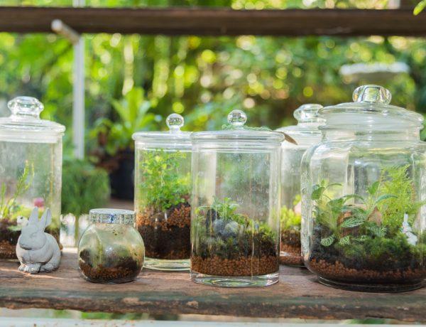 Learn how to make a terrarium.