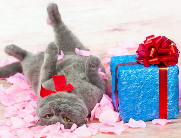Cat gifts for cats and their humans.
