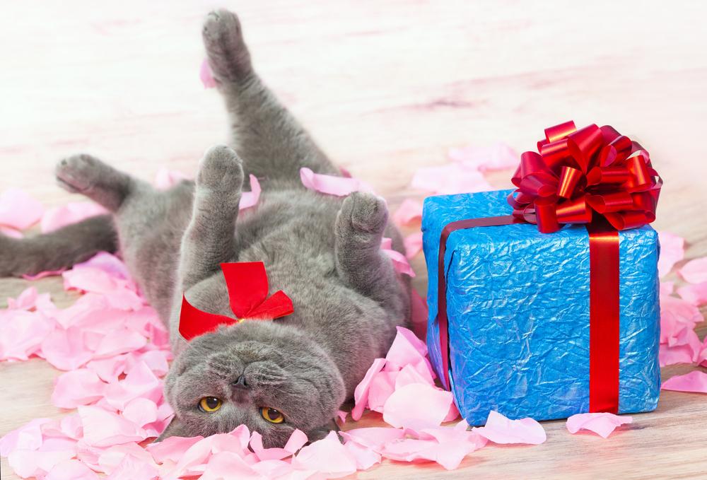 Днем рождения, открытка кот с подарком