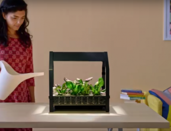 Go to IKEA... become a hydroponic farmer? You can with this growing kit.