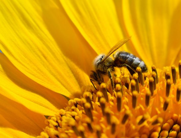 Time to take a nap. Researchers found that 57 pesticides are in honeybees. Ugh.