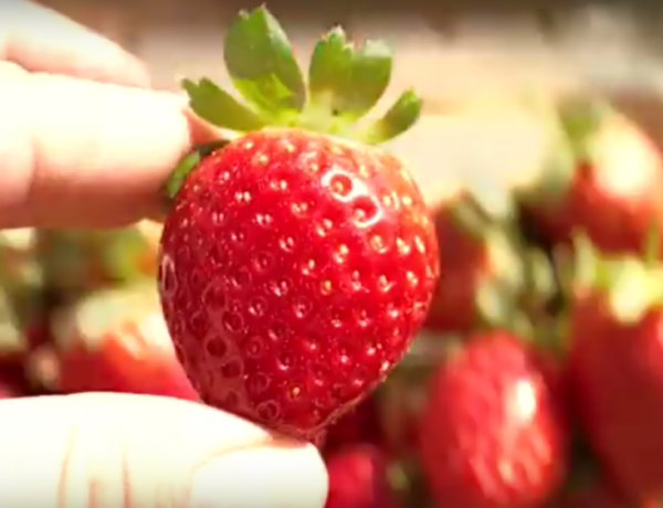 Let this strawberry live... in your mouth. Let's stop food waste.