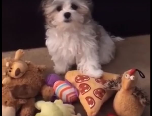 This cute dog really loves pizza.