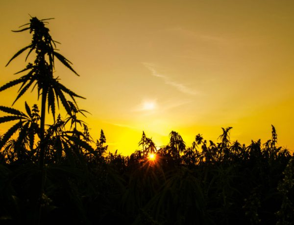 Hemp History Week is here and it's time to celebrate.