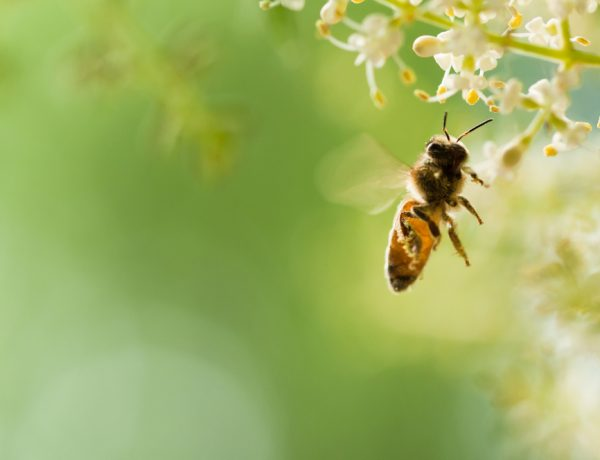pollinator habitats to be increased in minnesota