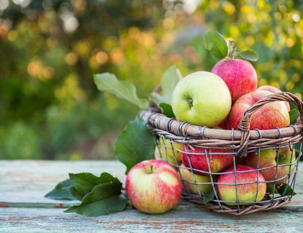 Apple cider slushie recipe