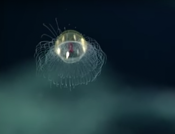 Jellyfish are very graceful.