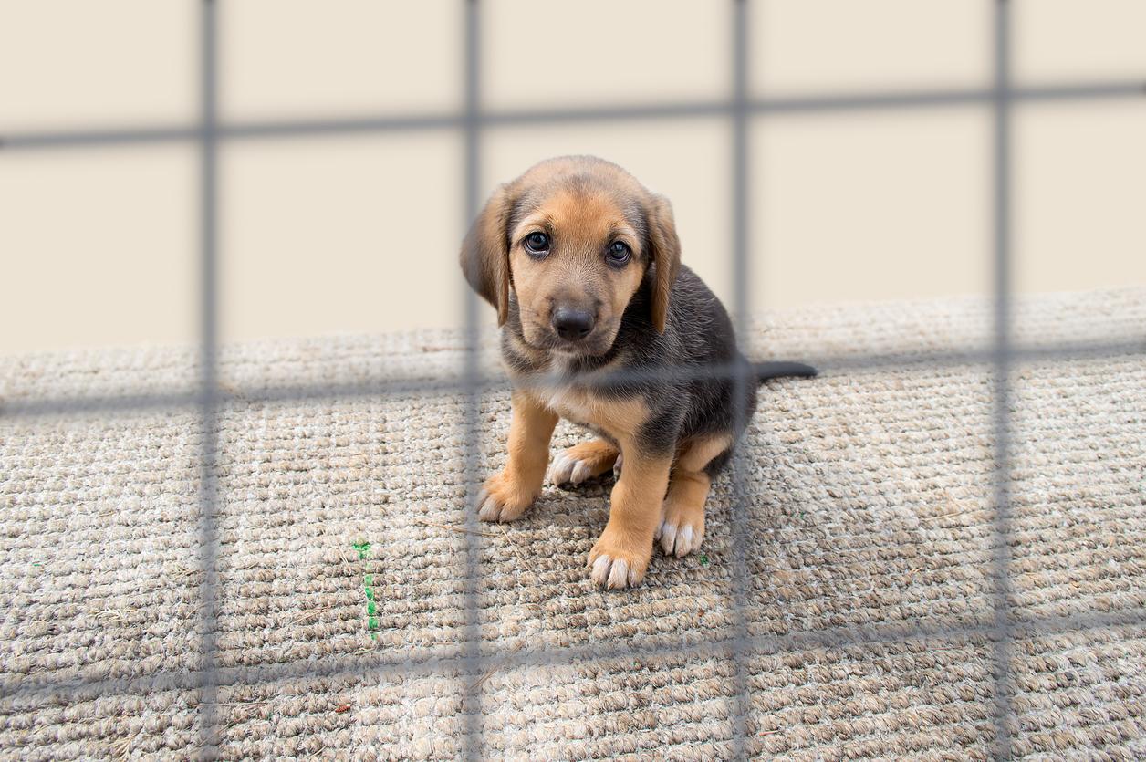 Animal welfare matters a lot to PETA.