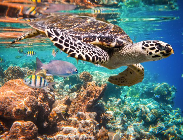 11 Super Simple Tips for How to Protect Endangered Sea Turtles From Land