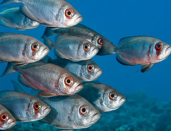 Fish Have Friends (So Maybe Go Vegan and Stop Eating Them?)
