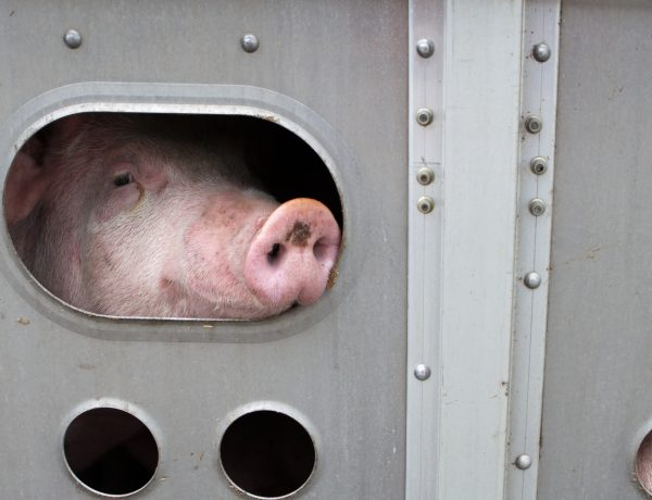 Court Rules in Favor of Compassion for Animal Rights Activist