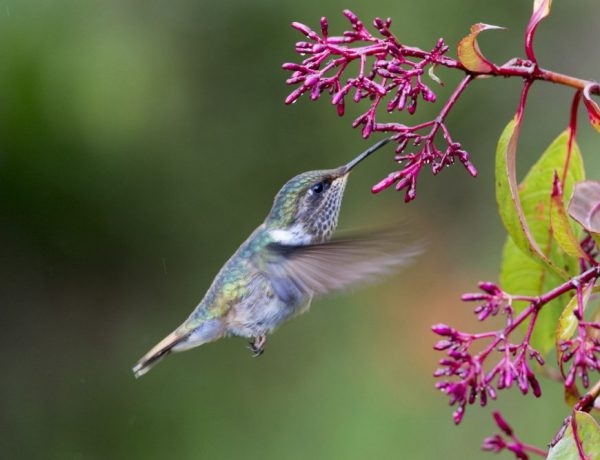DIY Hummingbird nectar is easy to make and so worth the little effort.