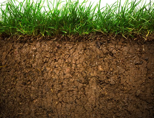Soil: the Most Important Piece of the Organic Puzzle