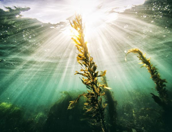 How to Get in on Magical Seaweed Skin Benefits (Plus Superfood Skincare Picks)